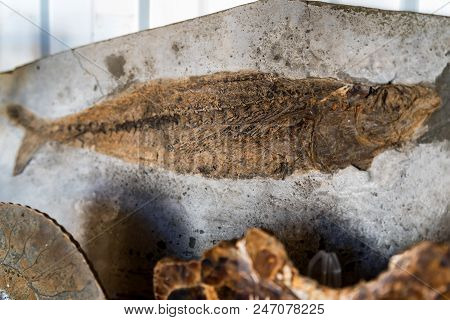 Close Up Print Of Fish On Big Piece Of Clay