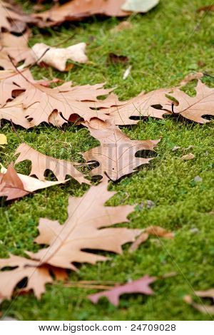 Scattered Autumn Leaves On Grass Seasons
