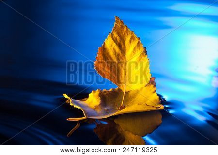 autumn leaf ship in blue water.