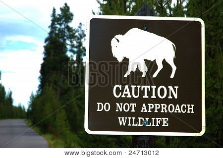 Don't play with the wild Bison sign.