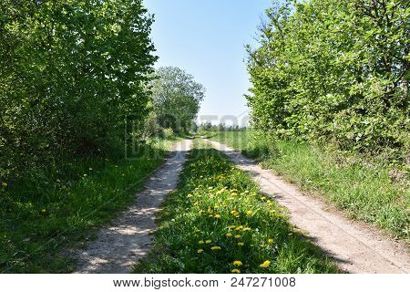 Beautiful Country Road With Blossom Yellow Flowers At The Swedish Island Oland