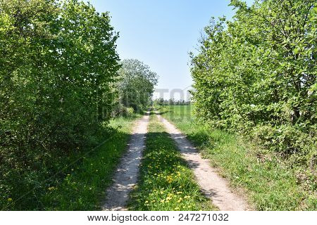Summer By A Beautiful Country Road At The Swedish Island Oland