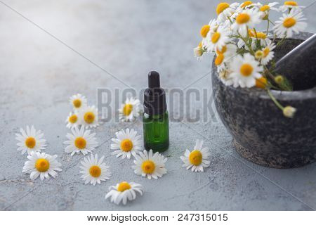 aromatherapy oil with fresh camomile flowers - beauty treatment