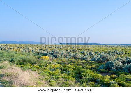Flat Scrubland High Desert Taos New Mexico