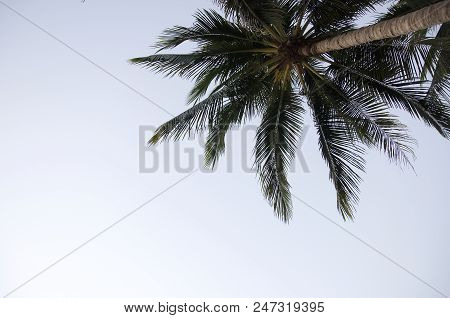 Palm View On Sky Background In Thailand