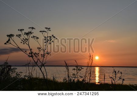Cow Parsley Silhouette Closeup By Sunset With The Swedish Oland Bridge In The Back