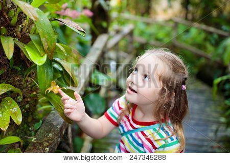 Child Looking At Flower In Jungle.