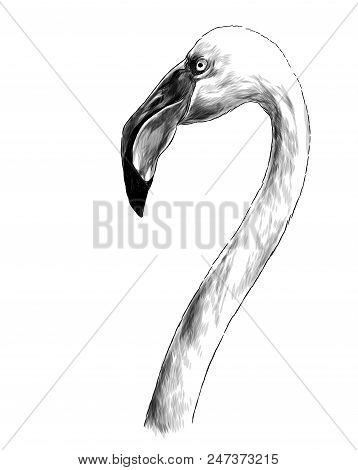 Bird Head Flamingo With Long Neck Sideways In Profile