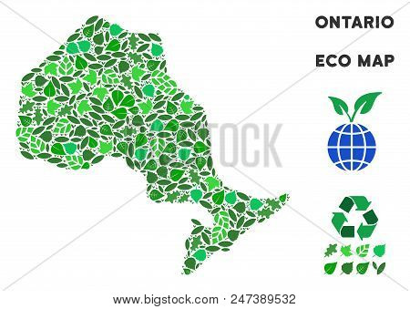 Ecology Ontario Province Map Mosaic Of Plant Leaves In Green Color Variations. Ecological Environmen