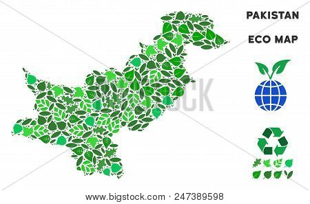Ecology Pakistan Map Composition Of Herbal Leaves In Green Color Variations. Ecological Environment