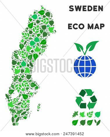 Ecology Sweden Map Composition Of Herbal Leaves In Green Color Tones. Ecological Environment Vector