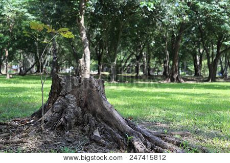 Old Stump On Fresh Green Grass Field, Tree Stump Chair Used For Outdoor Garden Furniture