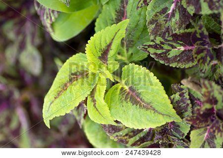 Ornamental Decor Plant Leaves, Decorative Houseplant Leafs
