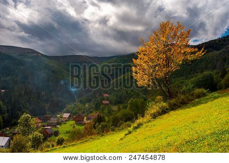 Tree With Yellow Foliage In Foggy Mountains. Beautiful Autumnal Scenery With Spruce Forest On Hillsi