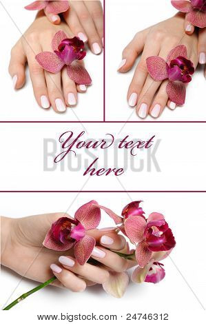 Collage.beautiful Hand With Perfect Manicure And Purple Orchid Flower Group Photo. Isolated On White
