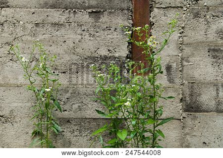 Flowers Growing In An Abandoned Industrial Area With A Concrete Wall.