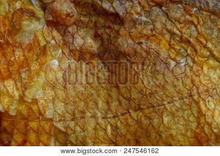 Brown Texture Of Fine Scales Of Smoked Fish