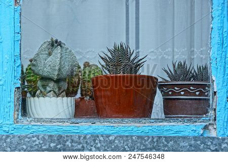 A Row Of Cacti In Pots Behind Glass