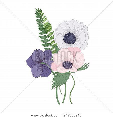 Beautiful Anemone Blossoming Flowers And Leaves Isolated On White Background. Detailed Drawing Of Go