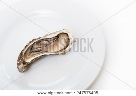 Fresh oyster. Raw fresh oyster is on white round plate, image isolated, with soft focus. Restaurant delicacy. Saltwater oyster.