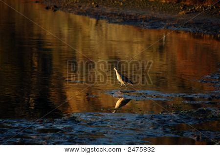 Long-Billed Waterbird