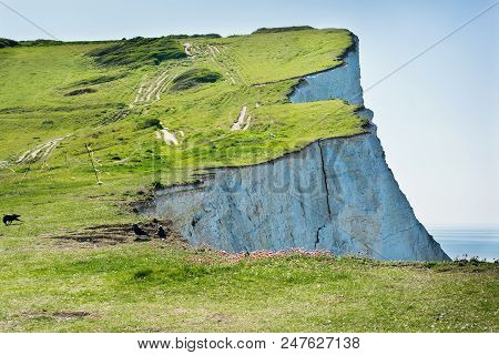 View Of The White Chalk Cliffs In The Morning, Seaford Head, East Sussex, England, Part Of Seven Sis