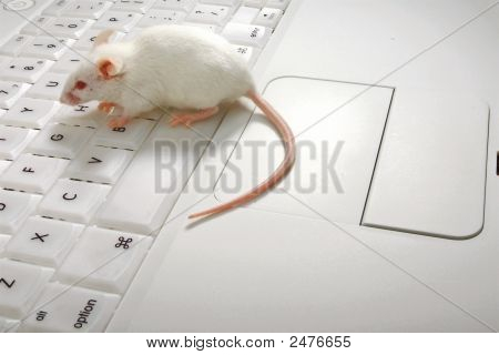 Mouse On Space Bar