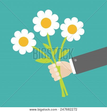 Businessman Hand Holding Bouquet Of White Daisy Chamomile Camomile Marguerite Flowers. Flat Design.