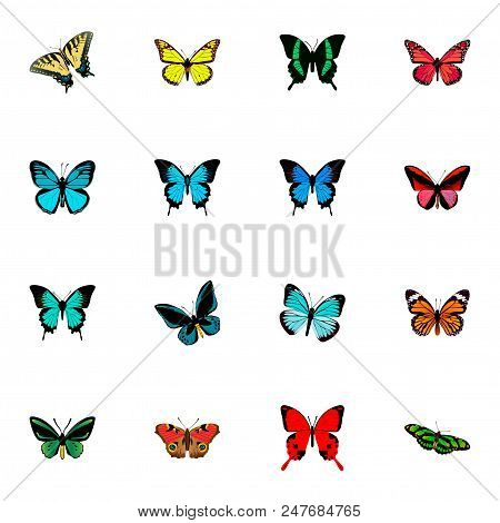 Set Of Moth Realistic Symbols With Precis Almana, Papilio Ulysses, Sky Animal And Other Icons For Yo