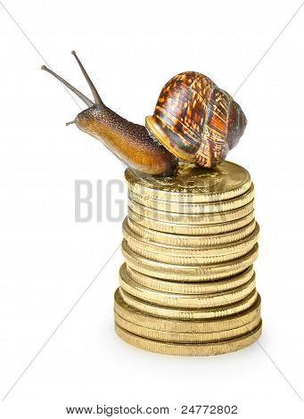 Snail On Golden Coins