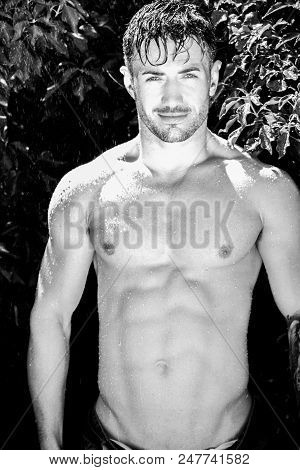 Fit, handsome, shirtless man with bare chest, muscles and defined pecs and body under rain shower in garden with green leaves and trellace poster