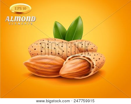 Vector Realistic Detailed Almonds With Nutshells With Green Leaves Isolated On Warm Background. Natu