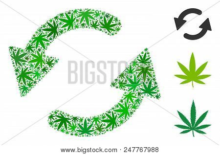 Refresh Ccw Collage Of Hemp Leaves In Various Sizes And Green Shades. Vector Flat Hemp Objects Are O