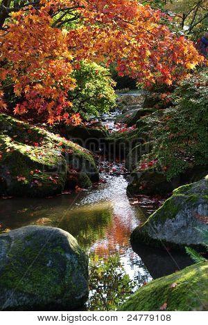 Arboretum,Seattle Japanese Garden #6