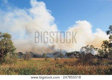 Bushland With Heavy Smoke From A Fire In An Suburban Area Of Knox City In Melbourne East.