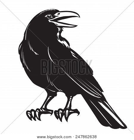 Graphic Black And White Crow Isolated On White Background. Old And Wise Bird. Raven Halloween Charac