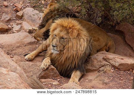Hollyday In South Afrika, Lions At The Safari