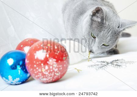 Gray cat indoors plays with Christmas baubles poster