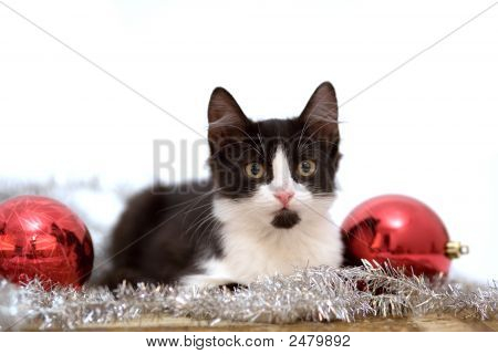 Lying Kitten With Christmas Decorations On The Carpet