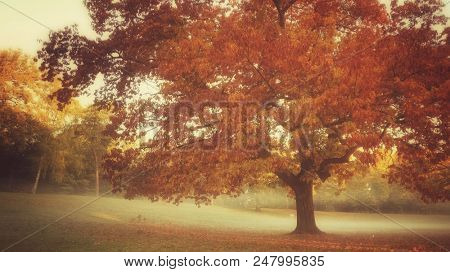 autumn scenery in a park with tree and fog, vintage style processing