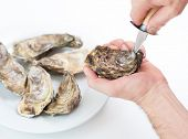 Fresh oyster. Man open fresh oyster. Raw fresh oyster is on white round plate, image isolated, with soft focus. Restaurant delicacy. Saltwater oyster. poster