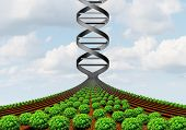 GMO farming and agricultural genetics and genetically modified crops or growing food biotechnology science and farm yield technology with 3D illustration. poster