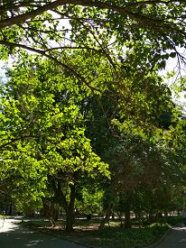 Summer Nature Green Tree Foliage Branch Road Landscape Park Outdoor Photo