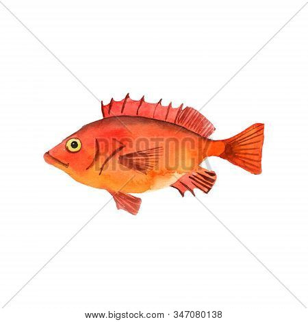 Watercolor Drawing Deepwater Redfish, Isolated At White Background Hand Drawn Illustration