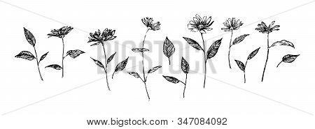 Set Of Hand Drawn Graphic Flowers. Stylized Sketch Decorative Botanical Vector Illustration. Black I
