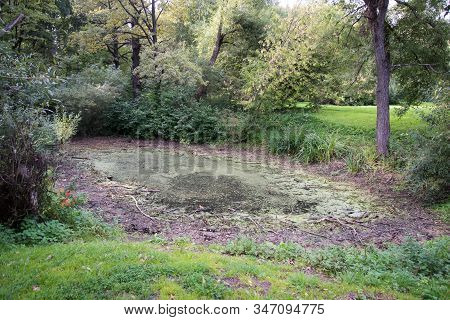 A Small Overgrown Pond. A Small Swamp. Unkempt Landscape Design. Errors In The Design Of The Pond. T