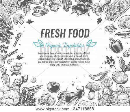 Sketch Vegetables. Organic Vegetable Foods Poster, Vintage Hand Drawn Vegan Products Brochures, Orga