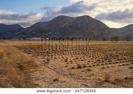 Bosnia And Herzegovina, Republika Srpska. Winter Countryside Landscape. Field Of Immortelle Plants (
