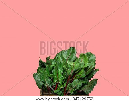 Wooden Box With Fresh Green Beetroot Kale Leaves On Cherry Pink Background. Healthy Plant Based Diet