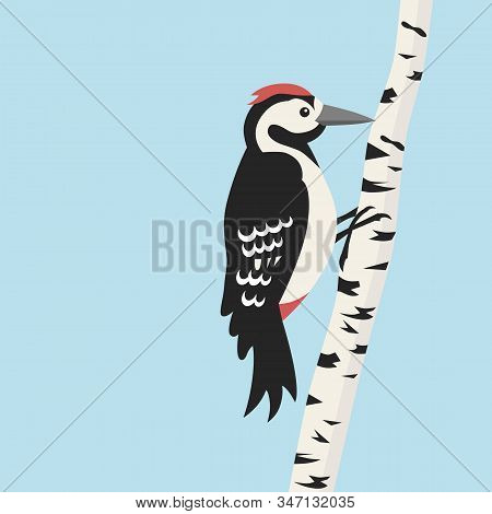 Woodpecker And Birch Against The Blue Sky.